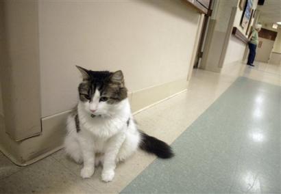 gato-oscar.jpg