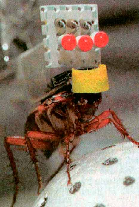 robot-insecto-2.jpg